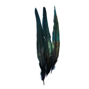 Перья черного петуха хвостовые