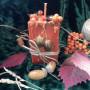Урожай Осени свеча-ритуал
