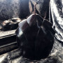 Сила Велигора свеча-ритуал восковая